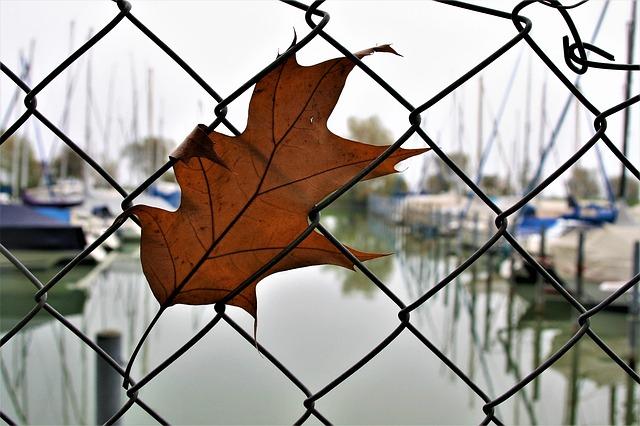 plot u rybníka