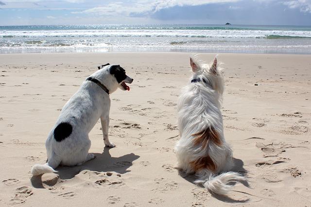 psi u moře